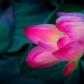 by Sam Long Fee - Flowers Single Flower