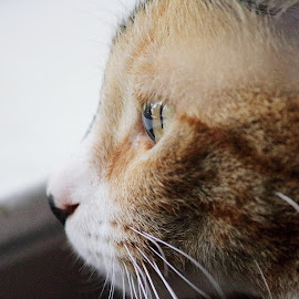 by Maranda Moore - Animals - Cats Portraits