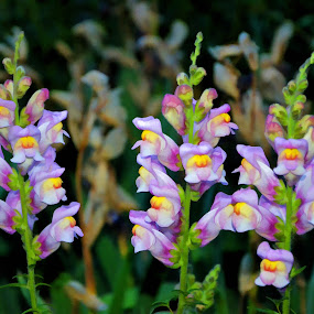 Цветя by Dobrinka Ivanova - Flowers Flower Gardens ( цветя, градина )