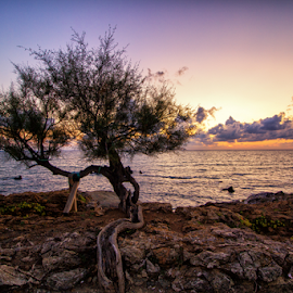 Lonely tree and sunset by Gianluca Presto - Nature Up Close Trees & Bushes ( sky, coast, rocks, romantic, cliff, sunset, tree, clouds, lonely, sea, colorful )