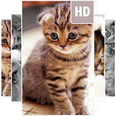 Free Download Cat Wallpapers APK for Samsung