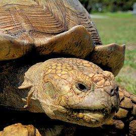 by Linda Brooks - Animals Reptiles ( reptiles )