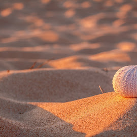 Beach Shell  by Shayne Sim - Landscapes Beaches ( sand, shell, beautiful, beach, landscape )