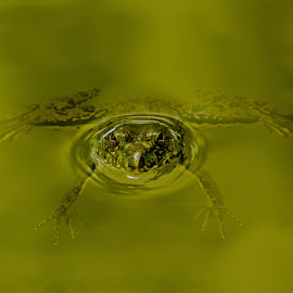 Frog by Abu Jafar Al Mahfuz - Uncategorized All Uncategorized