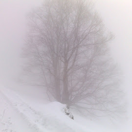Fog over Braunwald by Serguei Ouklonski - Landscapes Weather ( winter, tree, cold, season, fog, snow, switzerland, braunwald, frozen, glarus )