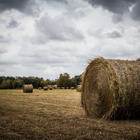 Hay Wheels by Habashy Photography - Landscapes Prairies, Meadows & Fields