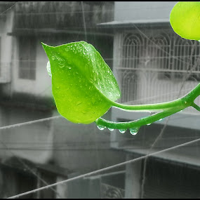 Green in the City.... by Sudipta Jana - Instagram & Mobile Android ( droplet, green, city, water drop,  )