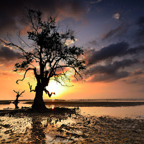 ::. Golden Wood .:: by Echi Amenk Fariza - Nature Up Close Trees & Bushes
