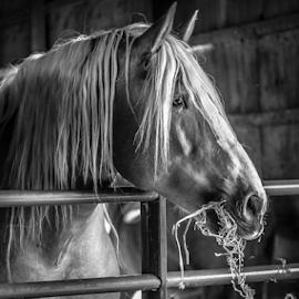by Divya Ram - Black & White Animals