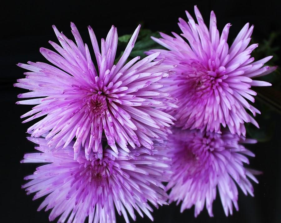 Purple flowers by Peg Elmore - Nature Up Close Gardens & Produce ( purple, flowers )