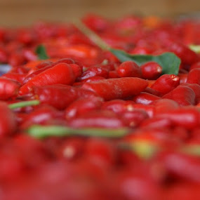 Red Chillies by Jason C Robinson - Food & Drink Fruits & Vegetables ( red, close up, chili, table top, closeup, fruits and vegetables, hot, chillies, chilli )