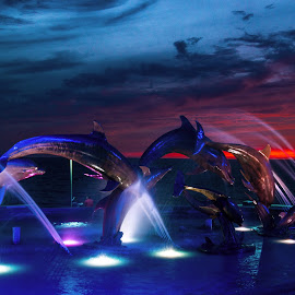 Continuity of Life by John Matzick - City,  Street & Park  Fountains ( lights, water, statue, sunset, dolphins, art, action, sundown, monument )
