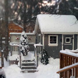 Little House Shed by Kerry  Milligan - Buildings & Architecture Homes ( tiny, shed, yard, snow, house, miniture, tilt shift )