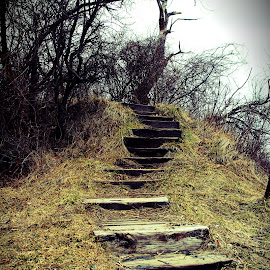 Steps To Nowhere by Kristin Patota - Landscapes Forests ( steps,  )