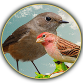 APK Game Song of the Birds for BB, BlackBerry