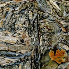 by Marijan Alaniz - Abstract Macro