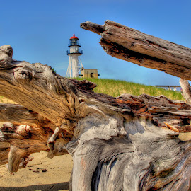 drfitwood by Fraya Replinger - Landscapes Beaches ( driftwood, wood, beautiful, lighthouse, beach )