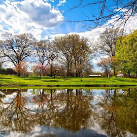 Spring at Kirby Park by Diane Ljungquist - City,  Street & Park  City Parks