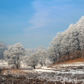 Winter is comming! by Claudiu Petrisor - Landscapes Forests ( winter, snow, trees, forest, leaves )