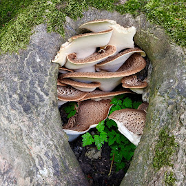 by Jo Thomas - Nature Up Close Mushrooms & Fungi