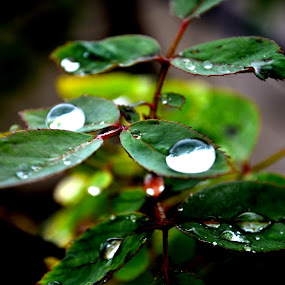 AFTER GROWING UP ........FIRST RAIN DROPS ...... by Sushant Ojha - Nature Up Close Trees & Bushes (  )