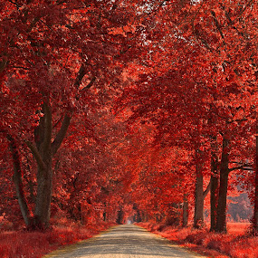 Wye Island Ruby Road by Nicolas Raymond - Transportation Roads ( countryside, dreamy, seasonal, wood, nrma, street, vibrant, yellow, wide-angle, travel, leaves, backdrop, colour, colourful, tree, nature, autumn, passage, foliage, trail, wye, maryland, walkway, surreal, branches, orange, grass, colors, symmetric, tourism, forest, somadjinn, rural, united states, colours, country, passageway, touristic, environment, season, warmth, trees, scene, lines, symmetry, warm, america, colorful, ruby, vivid, corridor, road, beauty, landscape, pretty, usa, island, fantasy, symmetrical, epic, canopy, nicolas raymond, path, trunks, queenstown, autumnal, hdr, pathway, park, lush, beautiful, ethereal, scenic, woods, environmental, red, color, wide angle, route, wye island, fall, background, brown, scenery, resource management area )