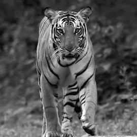 by S Balaji - Black & White Animals