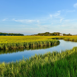 The Marsh by Prentiss Findlay - Landscapes Waterscapes ( wetlands, creek, tidal creek, marshlands, marsh )