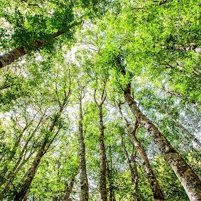 I faggi del Monte Volturino by Carmelo Parisi - Landscapes Forests