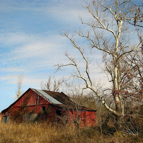 COUNTRY BEAUTY by Sharon Pierson - Buildings & Architecture Other Exteriors ( red barn white trees lighting,  )