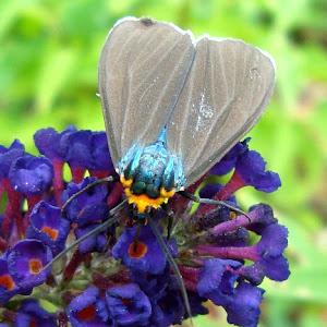 butterfly  July 12a 2010101aaaaa.jpg