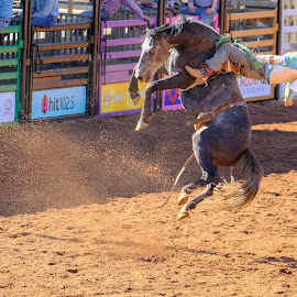 High Flying by Brent McKee - Sports & Fitness Rodeo/Bull Riding ( cowboy, qld, bucking bronc, horse, mt isa, rodeo, fuji, bareback )