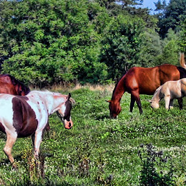 Beauty In Variety by Ann Klamik - Animals Horses ( animals, horses, colt, variety )