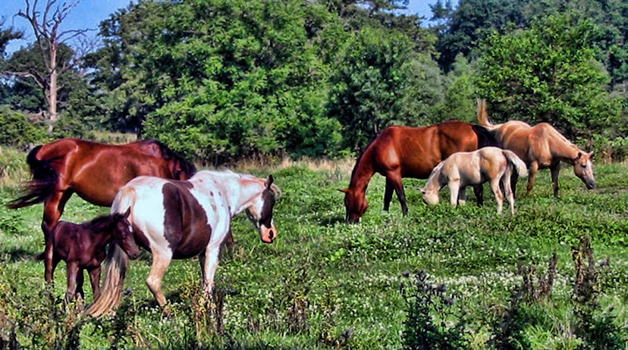 Beauty In Variety by Ann Klamik - Animals Horses ( animals, horses, colt, variety,  )