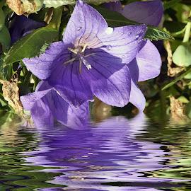 purple flower by LADOCKi Elvira - Digital Art Things