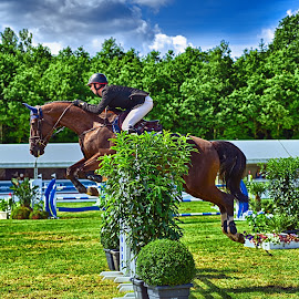 Overflying The Obstacle by Marco Bertamé - Sports & Fitness Other Sports ( jumping, réiser päerdsdeeg, green, obstacle, horse, 2016, international, csi jumping, brown, roeser, equestrian, luxembourg )