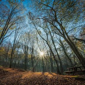 Morning Light by Arda Erlik - Landscapes Forests ( nature, forest, istanbul, turkey, landscape )