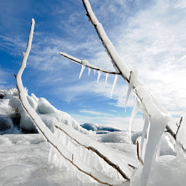 All Iced Up by Sandra Updyke - Nature Up Close Other Natural Objects ( blue sky, ice, icing, sticks, lake superior )
