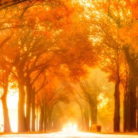 Autumn Colours by Teus Renes - Nature Up Close Trees & Bushes ( etten-leur, colour, autumn, trees, leaf )