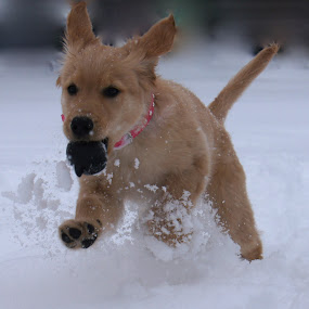 by Tracy Marie - Animals - Dogs Running