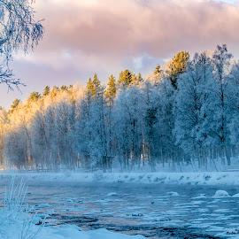 -30 c by Marko Paakkanen - Landscapes Forests ( tranquil, winter, tree, cold, sunset, majestic, snow, travel, landscape, river,  )