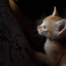 by Allama Nandi - Animals - Cats Kittens