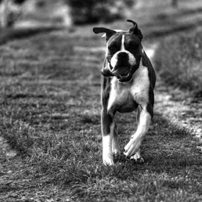 That tounge. by Jordiie Hunt - Animals - Dogs Running
