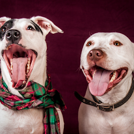 Ole Happy Day by Myra Brizendine Wilson - Animals - Dogs Portraits ( dogs smiling, dogs, nc, charlotte, dog,  )
