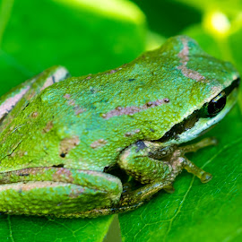 by Keith Sutherland - Animals Amphibians