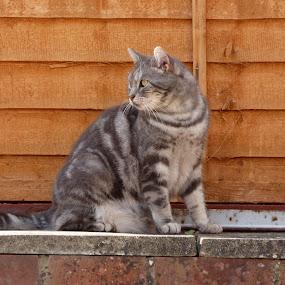 cat by Nick Parker - Animals - Cats Portraits ( cat,  )