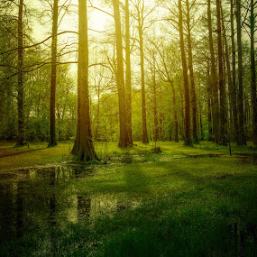Forrest Glow by Robert Mullen - Landscapes Forests ( water reflections, park, greensprings park, trees, sunlight, woods,  )