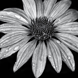 by Margie Troyer - Black & White Flowers & Plants