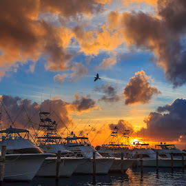 Sunset at the Marina by Tim Hancock - Transportation Boats ( clouds, water, sunset, sportfishing, boats )