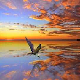 Man O' War Bird by Marvin Hurlston - Digital Art Animals ( clouds, bird, sunset, man o' war bird, evening sky )